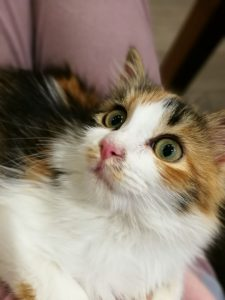 gattino-gabriella