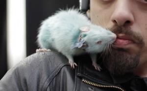 uomo con ratto (3)